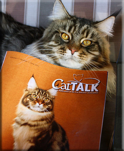 Home   Stormytown Maine Coons