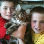 Welcome to Stormytown Maine Coons! | Stormytown Maine Coons