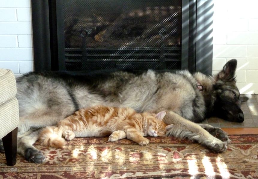 maine coon kittens for sale mn